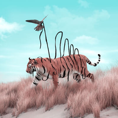 Large Surreal Tiger Big Cat Illusion African Animal Wildlife Surreal Photography by Julien Tabet