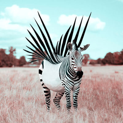 Large Surreal Zebra Illusion African Animal Wildlife Surreal Photography by Julien Tabet